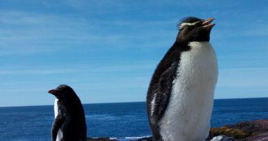 Santa Cruz: Puerto Deseado se prepara para recibir al turismo sustentable